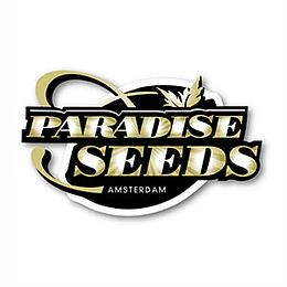 Auto white Berry x3 Paradise Seeds