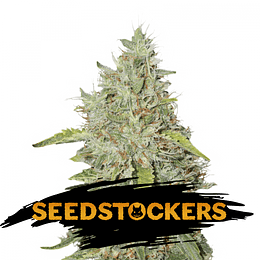 Northern Lights Auto x5 Seeds Stockers