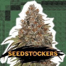 Blackberry Gum Auto x5 Seeds Stockers