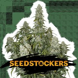 Big Bud Auto x5 Seeds Stockers