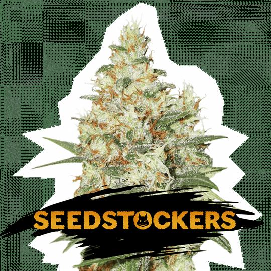 Og Kush Auto x5 Seeds Stockers