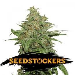 Ak 420 Auto x5 Seeds Stockers