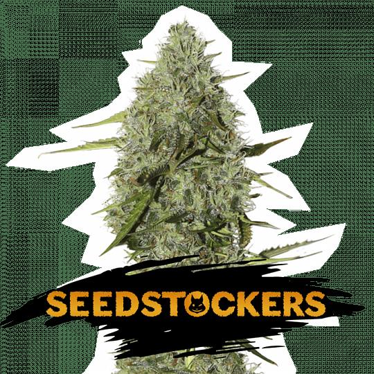 BCN Critical xxl Auto x5 Seeds Stockers