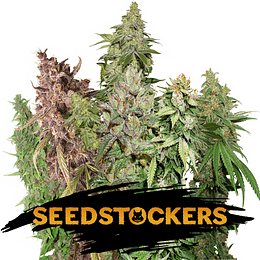 Sativa Auto Mix x12 Seeds Stockers