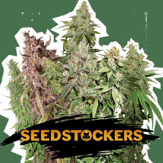 Sativa Auto Mix x12 Seeds Stockers
