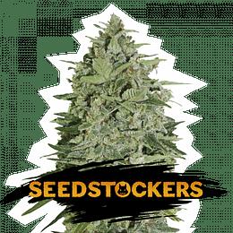 Super Skunk Auto x3 Seed Stockers