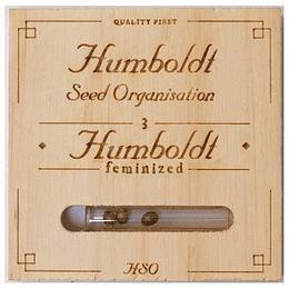 UK Cheese Auto x3 Humboldt Seeds