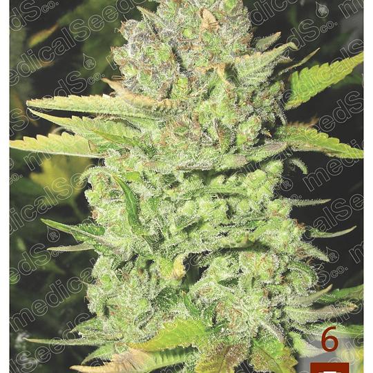 Devil Fruit x3 Medical Seeds