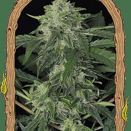 OFERTA Jungle Fever Auto x5 Exotic Seeds