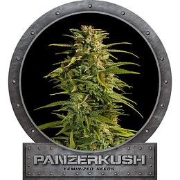 Panzer Kush  x6 Fem Garden HighPro