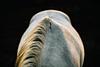 Un caballo a la Luz