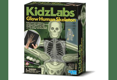 Glowing Human Skeleton