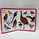 Primeros Animales - Primera enciclopedia English / español para Niños