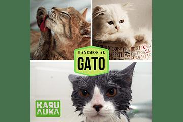 ¿Cómo bañar a mi gato?