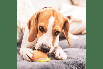 ¿Cómo ejercitar a mi perro en casa?