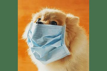 Consejos para pasear a tu perro durante la pandemia