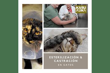 Castración y Esterilización: Todo lo que necesitas saber para tu mascota