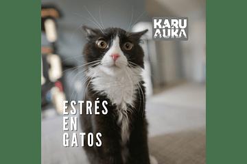Estrés en gatos ¿Qué hacer?