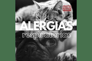 ¡Achú! Alergias respiratorias en mascotas