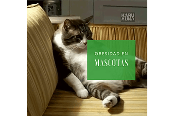 Obesidad en mascotas