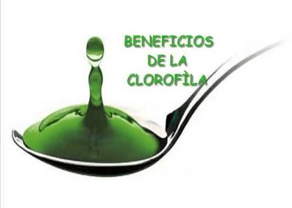 Todo lo Que Debes Saber de la Clorofila Liquida
