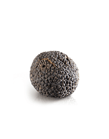 Trufas Negras Frescas 20 gramos