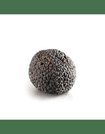 Trufas Negras Frescas 20 gramos + botella de aceite de oliva con aroma de trufas negras de 50 ml