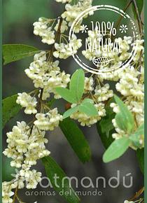 Aceite Esencial Verbena Exótica 5 ml.