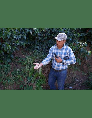 Café Guatemala Quetzal (Huehuetenango SHB)