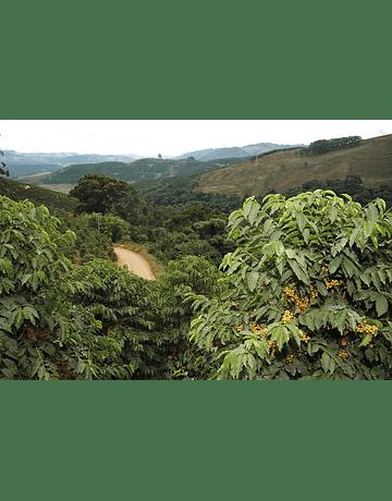 Café Brasil Cachoeira da Grama