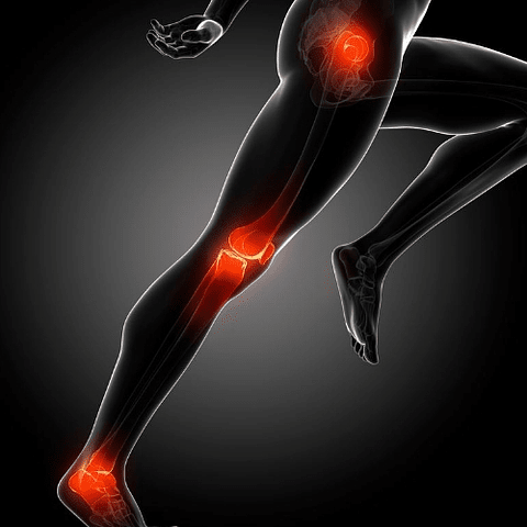 Curso - Biotensegridad de las Cadenas Musculares