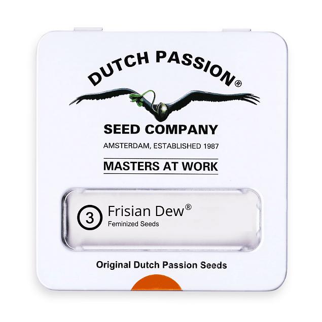 Frisian Dew x3