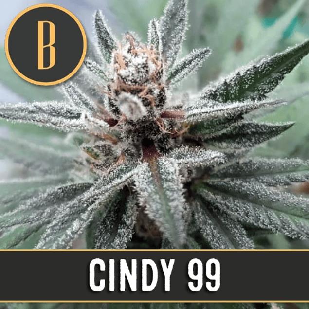 Cindy 99 x3