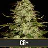 CR+ x3