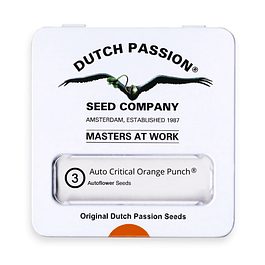 Auto Critical Orange Punch x3