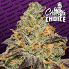 Blue Kush Berry x3 - Chongs Choice