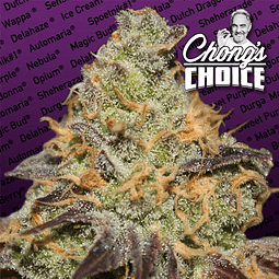 Blue Kush Berry - Chongs Choice
