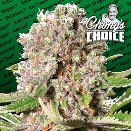Mendocino Skunk - Chongs Choice