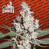 LA Amnesia x3 - Chongs Choice
