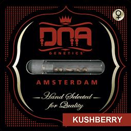 Kushberry