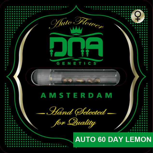 Auto 60 Day Lemon