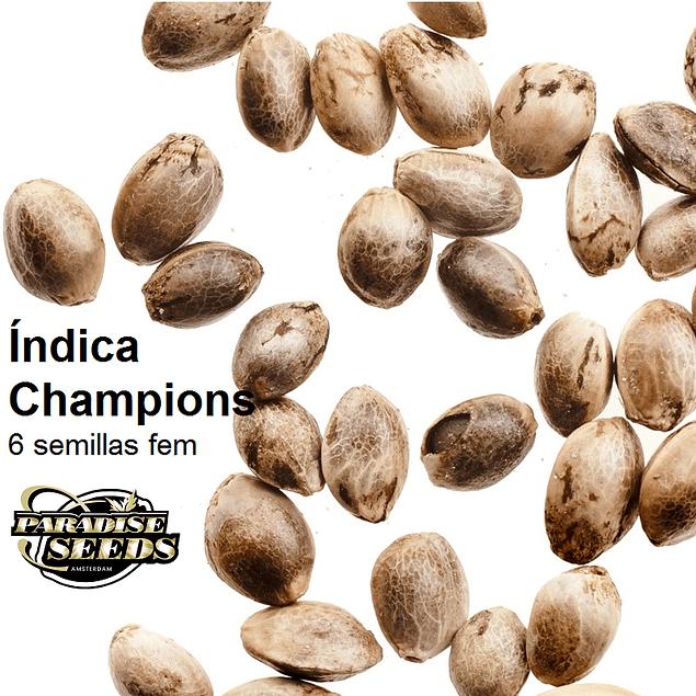 Pack Índica Champions
