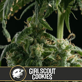 Girl scout cookies x3