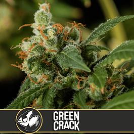 Green crack x3