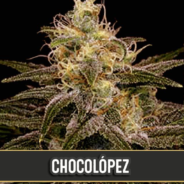 Chocolopez x3