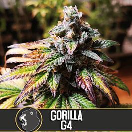 Gorila G4 3+1