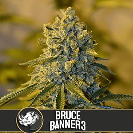 Bruce Banner 3 3+1