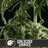 Auto Girl scout cookies x3