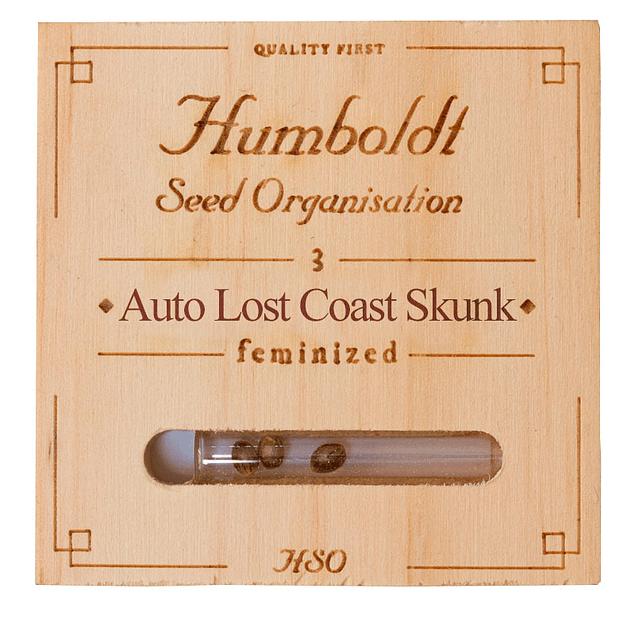 Auto Lost coast skunk x3