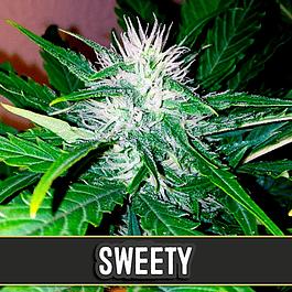 Sweety Auto 3+1